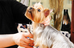 Become A Pet Groomer With Online Training Program Overview Ics