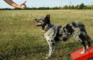 Cours de dressage de chiens en ligne