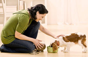 Online natural holistic pet care courses